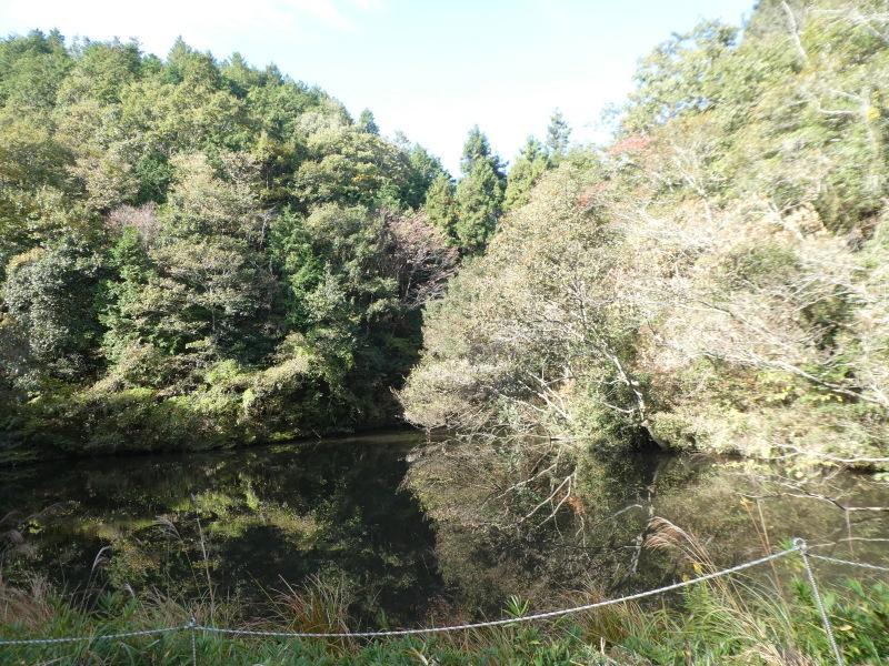 枯れ松大木の伐採・・・孝子の森_c0108460_21185638.jpg