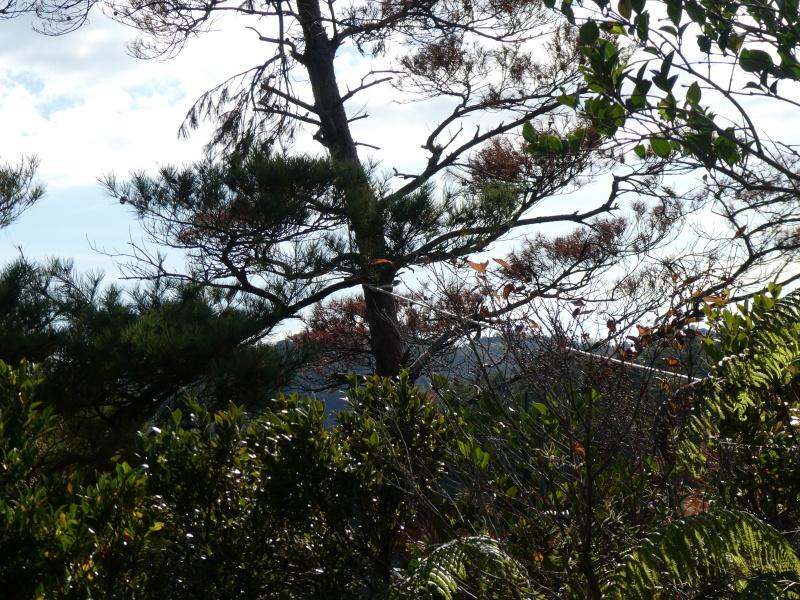 枯れ松大木の伐採・・・孝子の森_c0108460_21224916.jpg