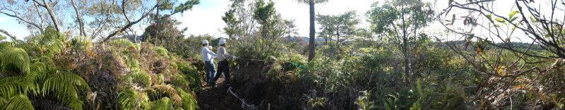 枯れ松大木の伐採・・・孝子の森_c0108460_21271227.jpg