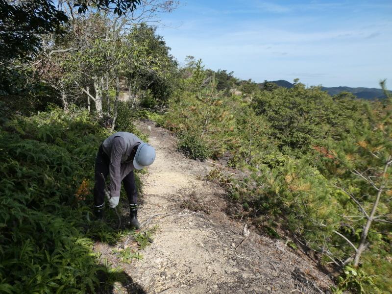 枯れ松大木の伐採・・・孝子の森_c0108460_21293768.jpg