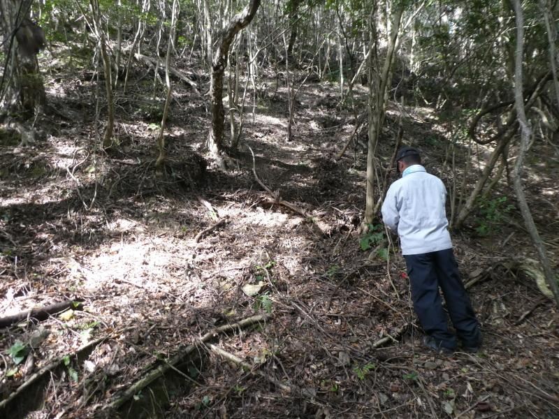 枯れ松大木の伐採・・・孝子の森_c0108460_21371902.jpg