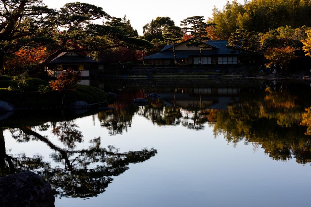 国営 昭和記念公園の紅葉_a0261169_12502446.jpg