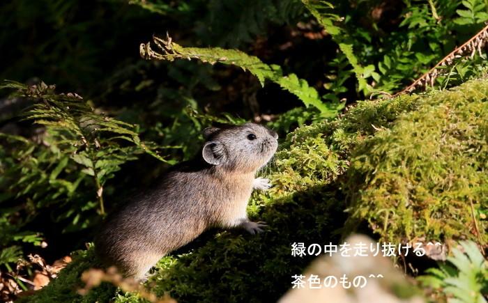 ナキウサギとシロハヤブサの季節_c0229170_21022884.jpg