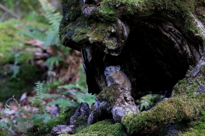ナキウサギとシロハヤブサの季節_c0229170_21032361.jpg