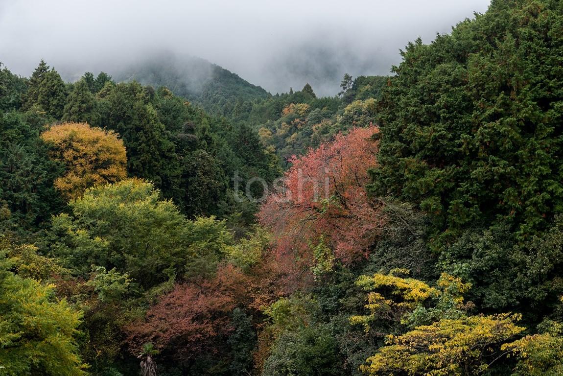 山麓線_c0350572_20251569.jpg