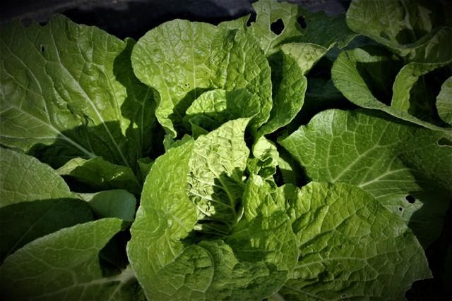 北摂の家庭菜園も冬に向かっている・・!!_f0229190_20191303.jpg