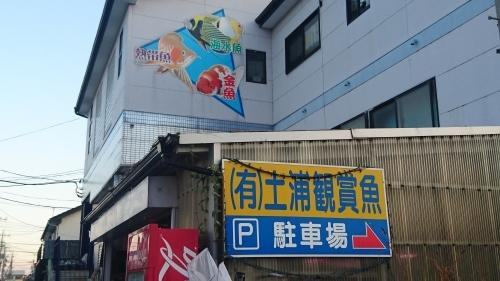 土浦観賞魚に行って来た。_b0298605_20415663.jpg