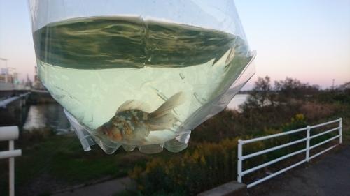 土浦観賞魚に行って来た。_b0298605_20423586.jpg