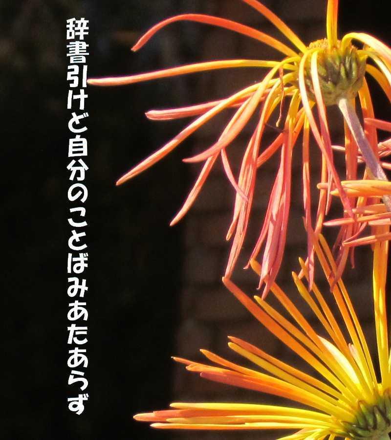 f0117041_06311987.jpg