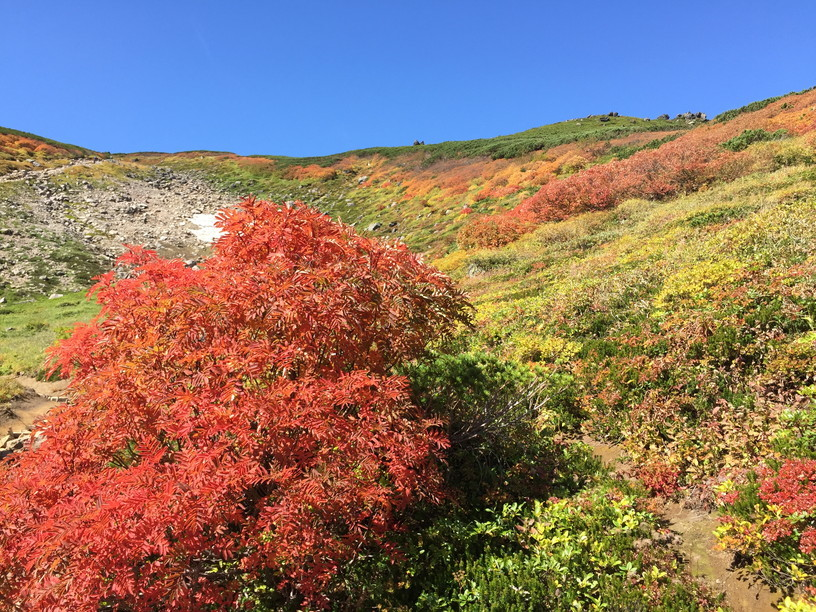 "2018年9月 『大雪・十勝連峰の秋』 September 2018 ""Autumn Color in Mt Taisetsu & Mt Tokachi\""_c0219616_12205625.jpg"