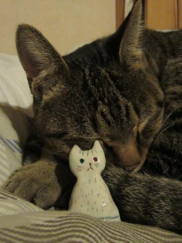 猫の不思議_a0219423_22330792.jpg