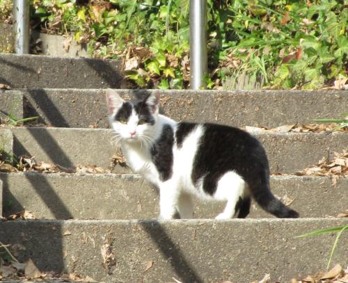 猫の不思議_a0219423_23053459.jpg