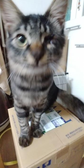 仔猫の日常・パート11_d0233224_23343664.jpg