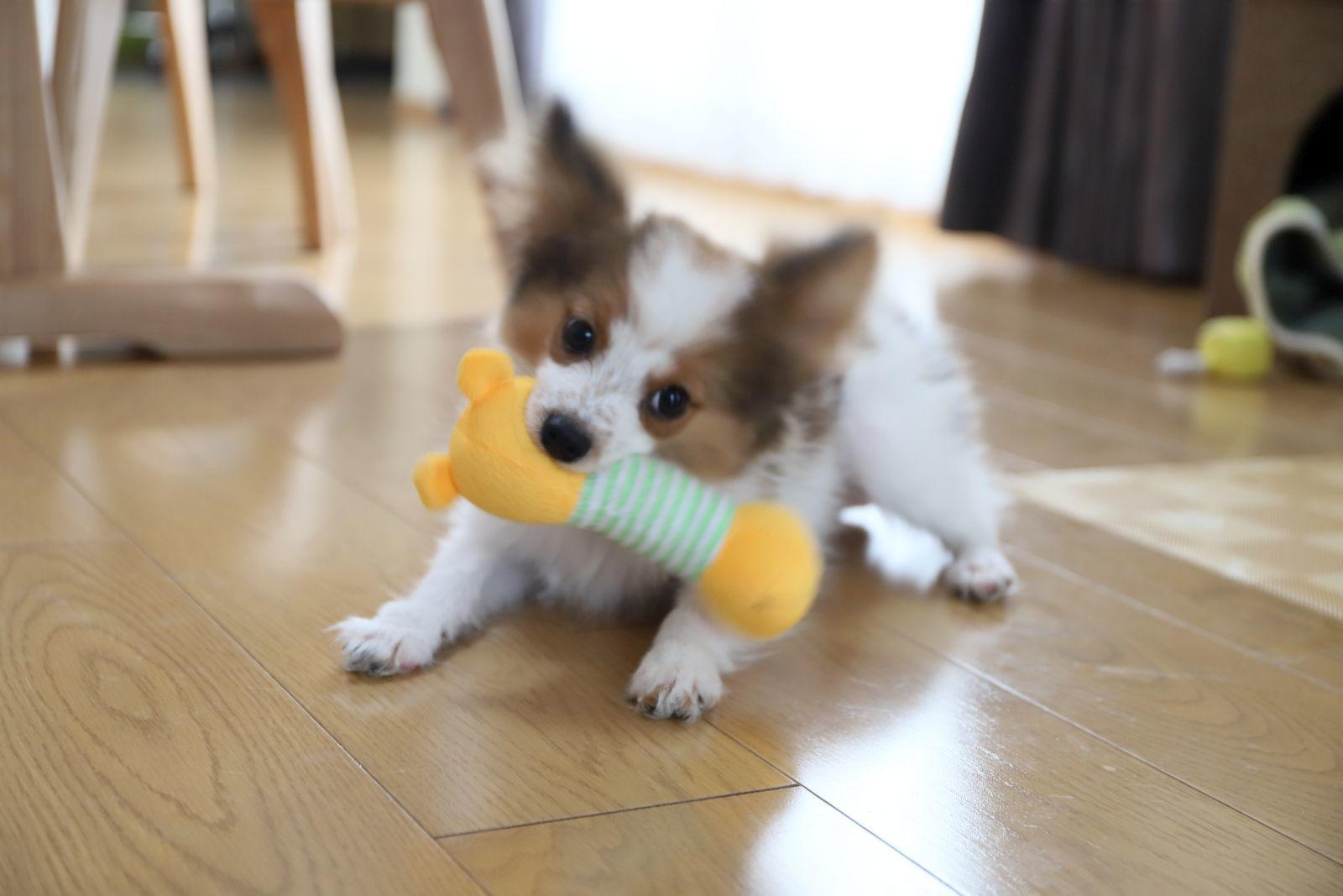 おもちゃ大好き_a0027126_17020937.jpg