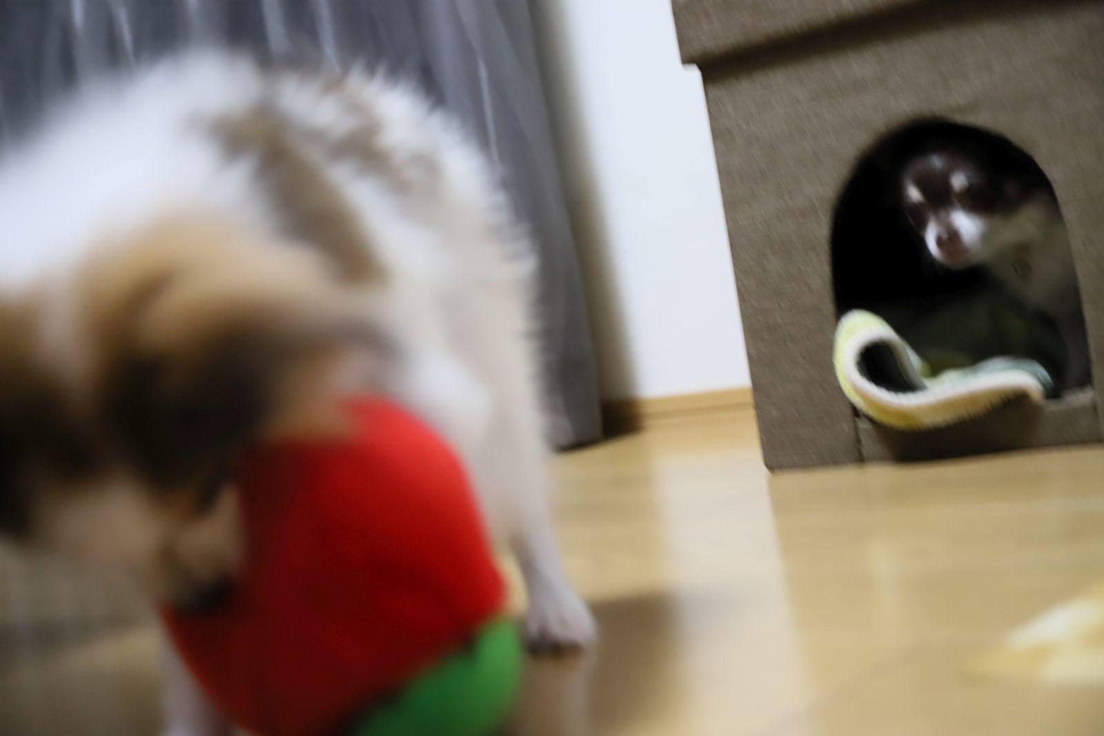 おもちゃ大好き_a0027126_17024453.jpg