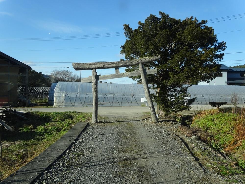 猫神社参拝ツアーが_c0111229_19022150.jpg