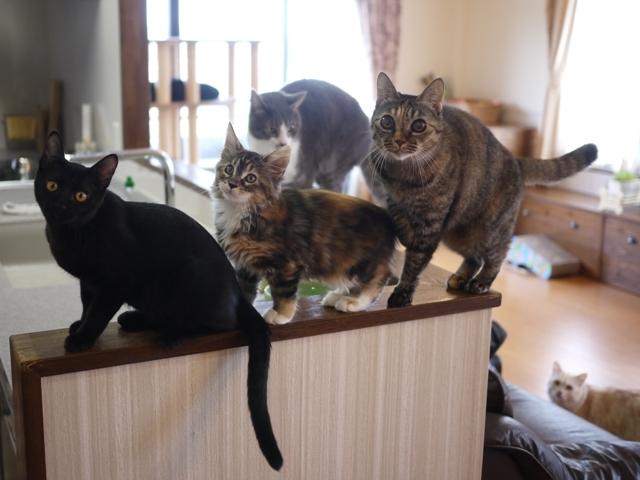 猫のお留守番 天ちゃん麦くん茶くん〇くんAoiちゃん編。_a0143140_21003051.jpg
