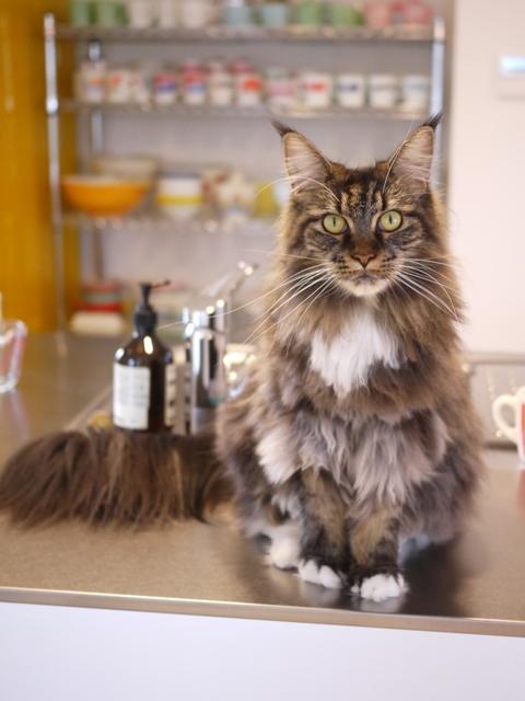 猫のお留守番 紙音ちゃん編。_a0143140_21033735.jpg