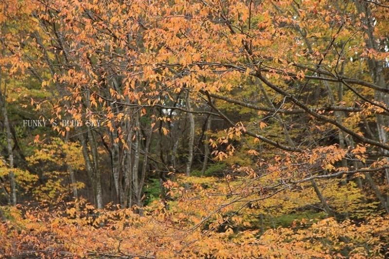 はらはらと秋が・・_c0145250_10402303.jpg