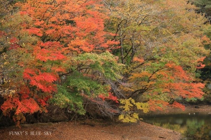 はらはらと秋が・・_c0145250_10421438.jpg