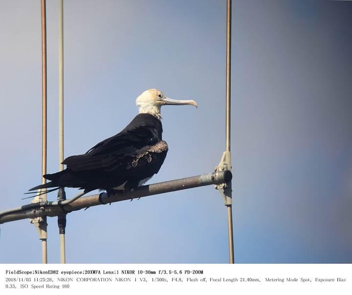 片貝漁港 2018.11.3_c0062451_1913674.jpg