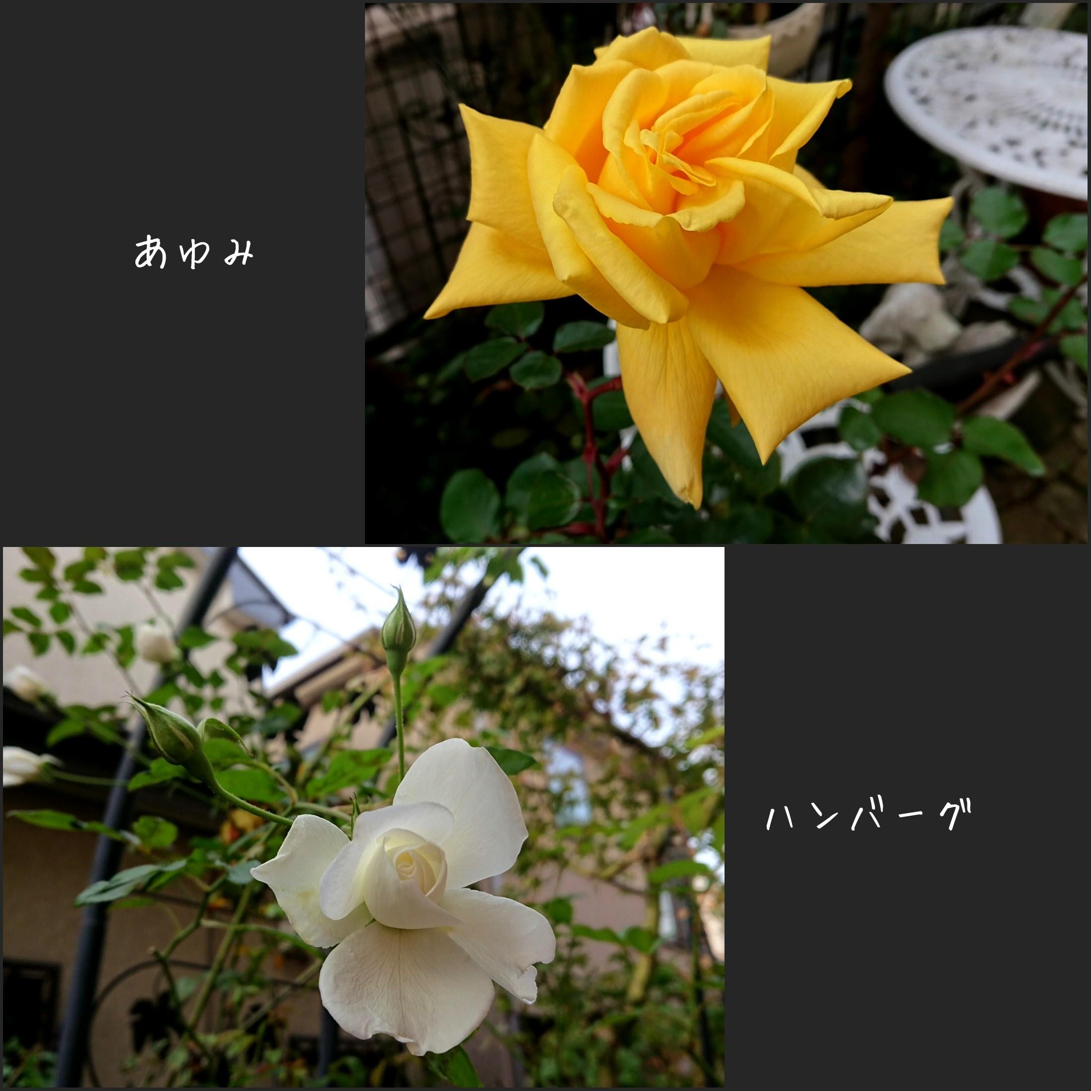 b0306158_09531596.jpg