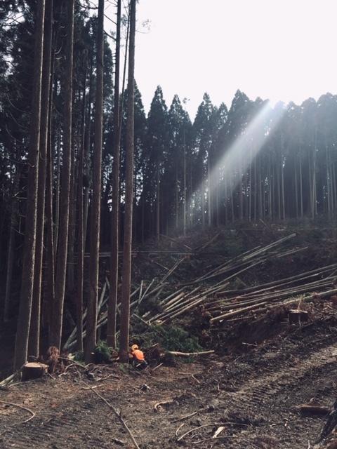 阿蘇小国町へ森林ツアーに行ってきました!_b0112371_11183147.jpg
