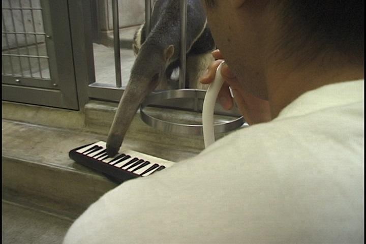 野村誠 鍵盤ハーモニカの時間_e0017689_22552793.jpg