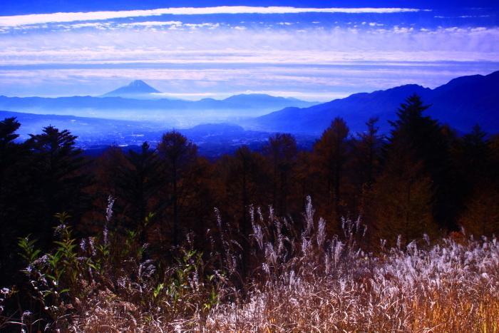 30年11月の富士(9)富士見平の枯すすきと富士_e0344396_14491283.jpg