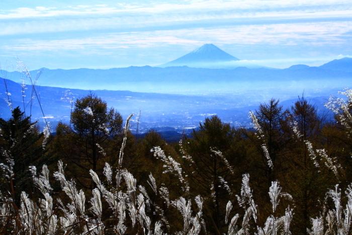 30年11月の富士(9)富士見平の枯すすきと富士_e0344396_14491998.jpg