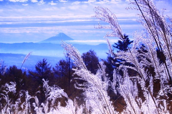 30年11月の富士(9)富士見平の枯すすきと富士_e0344396_14492796.jpg