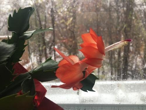 ニューヨーク、過激な初雪_d0240098_14200291.jpg