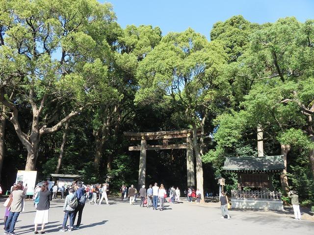 明治神宮の森は人工林(原宿散歩③)_c0187004_15575195.jpg