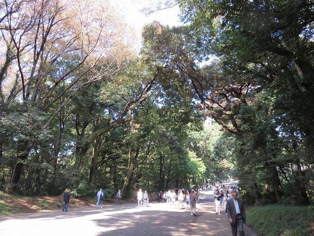 明治神宮の森は人工林(原宿散歩③)_c0187004_16014501.jpg