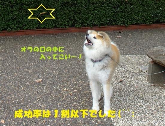 f0121712_07323026.jpg