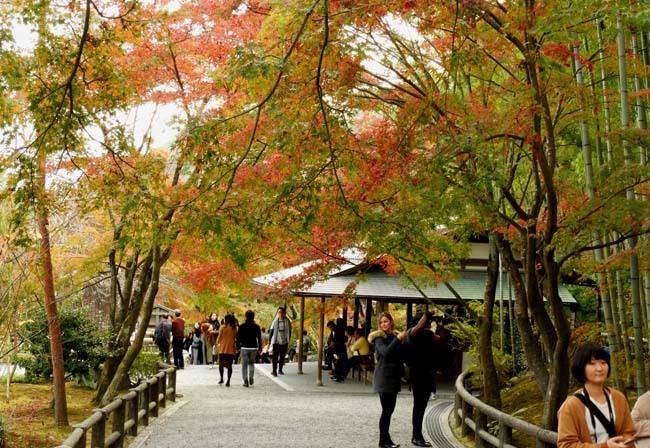 嵐山 天龍寺紅葉の盛り_e0048413_21302330.jpg