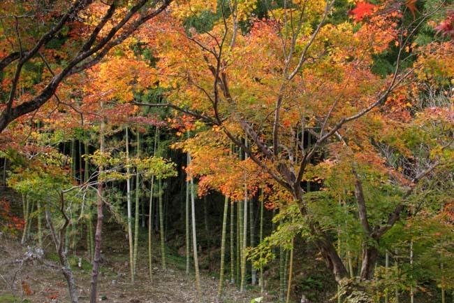 嵐山 天龍寺紅葉の盛り_e0048413_21302705.jpg