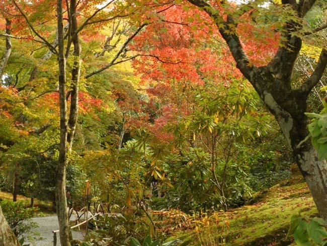 嵐山 天龍寺紅葉の盛り_e0048413_21303152.jpg