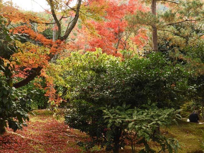 嵐山 天龍寺紅葉の盛り_e0048413_21304235.jpg