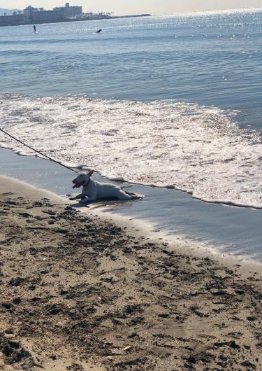 週末は由比ヶ浜のお散歩_b0310424_12195937.jpg