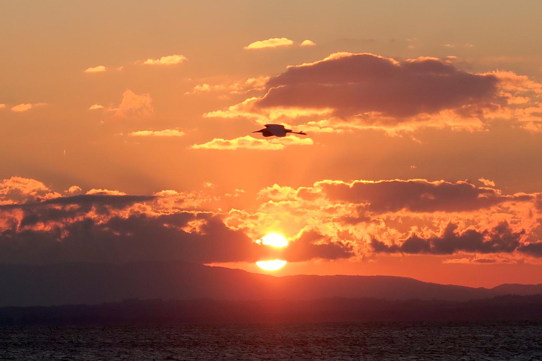 アオサギ飛びゆく夕日の湖、トラジメーノ湖_f0234936_6163164.jpg