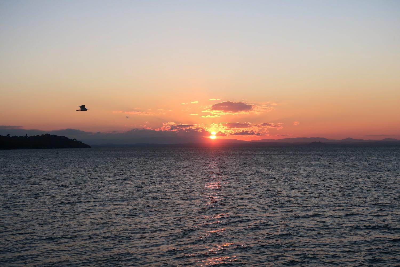 アオサギ飛びゆく夕日の湖、トラジメーノ湖_f0234936_622243.jpg