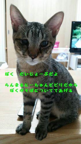 d0393041_23102377.jpg