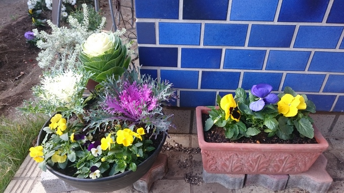 お花も植えた☆_e0040673_9565219.jpg