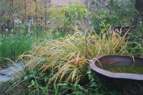 雨上がりの庭の色_e0181373_21051979.jpg