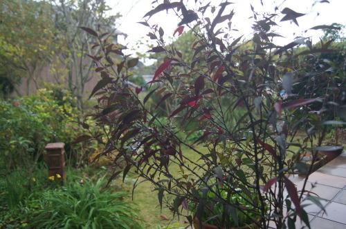 雨上がりの庭の色_e0181373_21052421.jpg