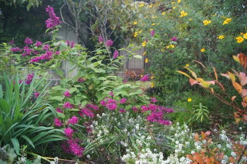 雨上がりの庭の色_e0181373_21054658.jpg