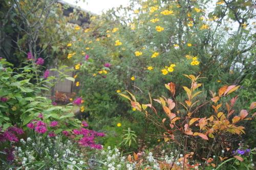 雨上がりの庭の色_e0181373_21055374.jpg