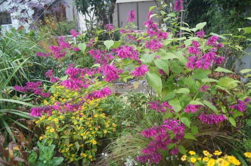 雨上がりの庭の色_e0181373_21055905.jpg
