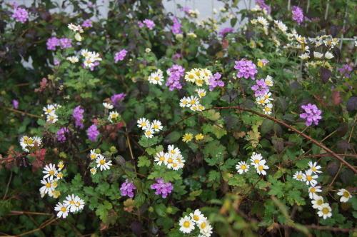 雨上がりの庭の色_e0181373_21060867.jpg